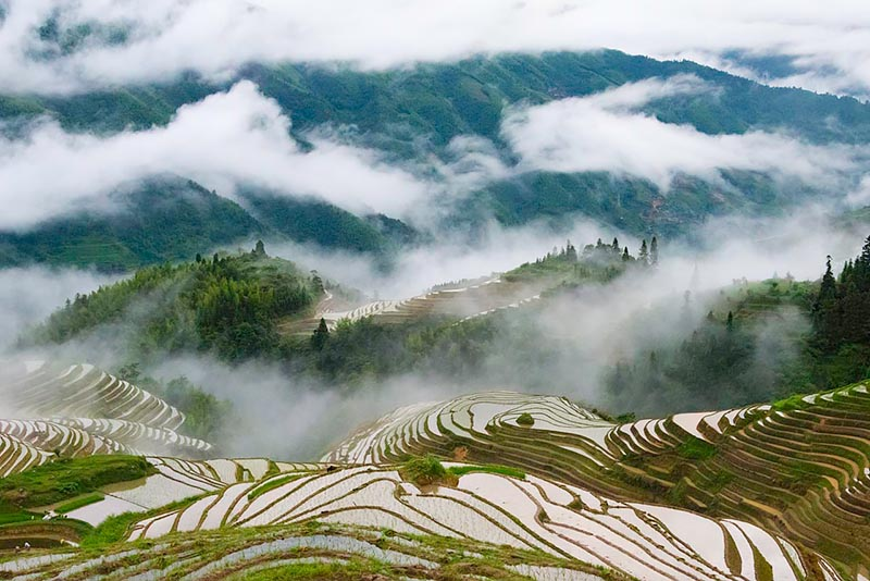 Longji Terraces in morning mist