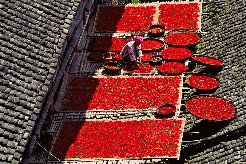 Zhuang Girl Drying Red Peppers