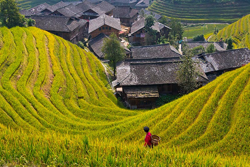 Terraces, Village and Red Yao Girl